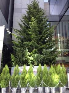 クリスマス銀座2014 ミキモトツリー