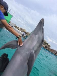 2015-10-17 鴨シー イルカ 1